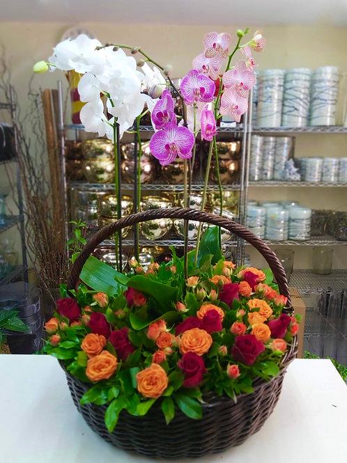 Phalaenopsis y mini rosas