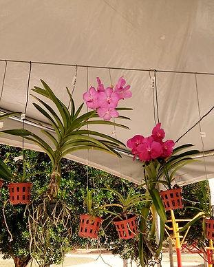 orquidea-2_edited.jpg