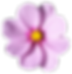 blossom-flower-png-transparent-picture-3
