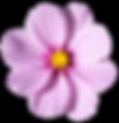 blossom-flower-png-transparent-picture-3