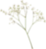 baby breath flower png.png