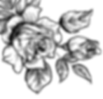 rose-sketch.png