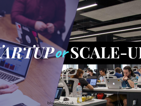 What's the difference between a startup and a scale-up?