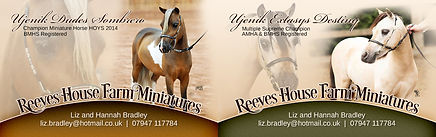 Equine Website, Print, & Logo Graphic Design Marketing