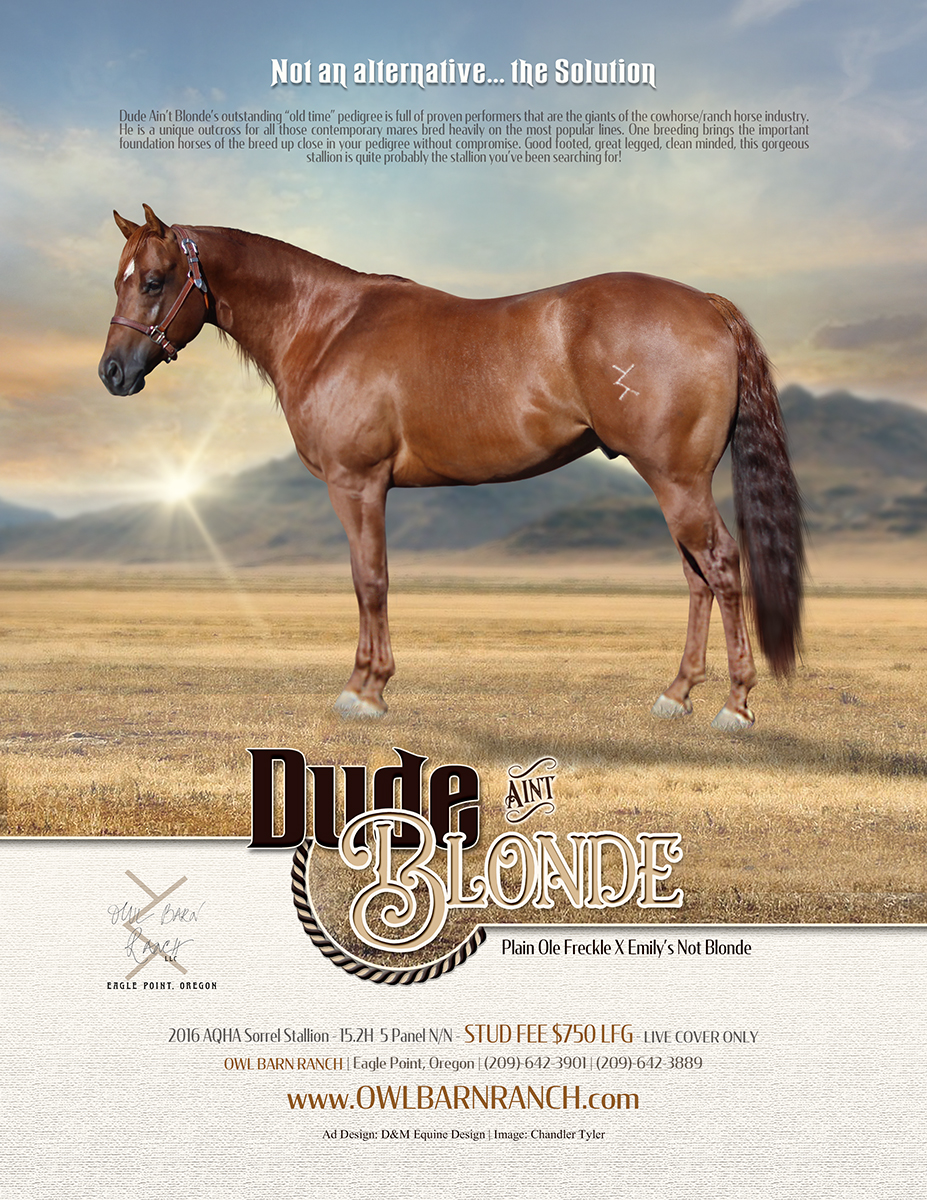 Equine Stallion Ads