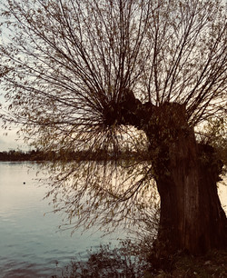 Damhus søen A3 / på lager