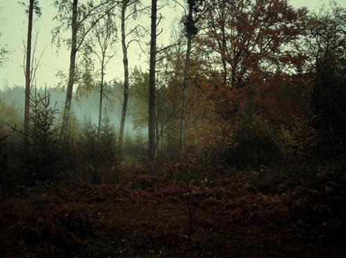 Misty woods A3 / på lager