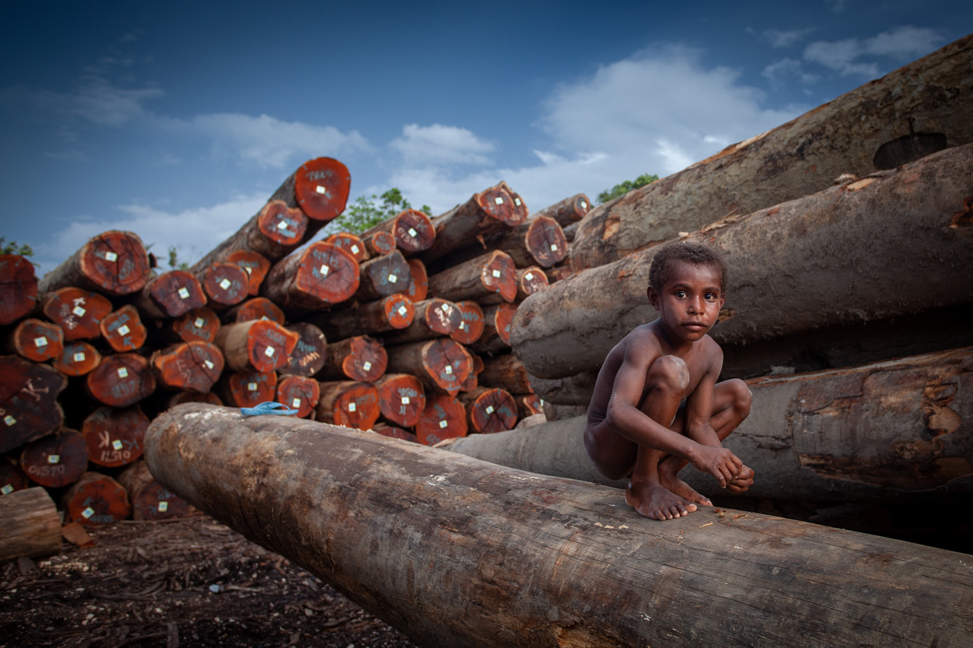 Young Papuan boy plays in the lumber yard as forklifts come to take the enormous trees to be loaded onto barges for export overseas.