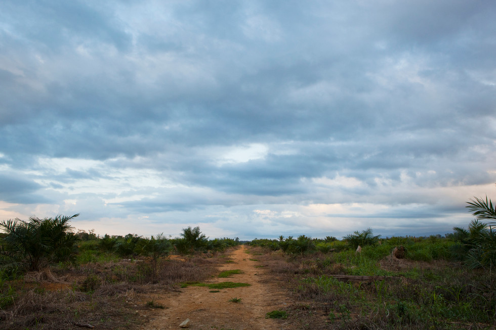 Once pristine forest this land has been sold and cleared for palm oil.