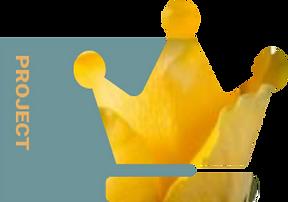 OPLOSSINGEN-NASSAU-ICOON 2.png