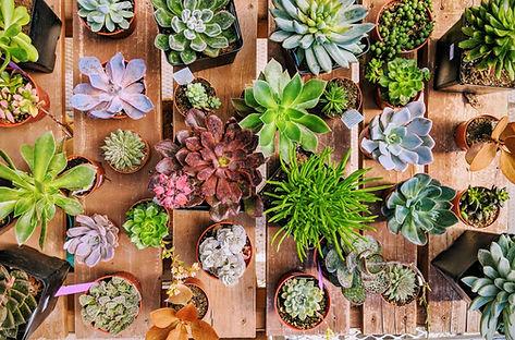 Succulents, plants, garden center