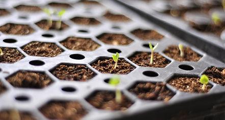 Garden centre plant flower vegetable