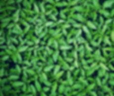 over 101 varieties of tomato plants garden centre winnipeg st. Leon Gardens