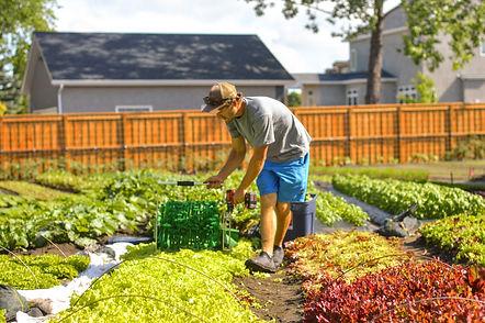 Urban Garden st. leon gardens in winnipeg food security