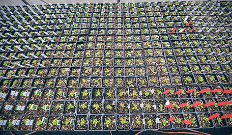 Garden center growing bedding plants