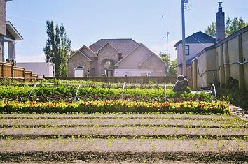 Urban Garden in winnipeg seasonal food security