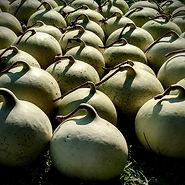Umbilical Gourd