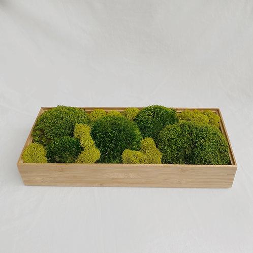Zen Moss Box