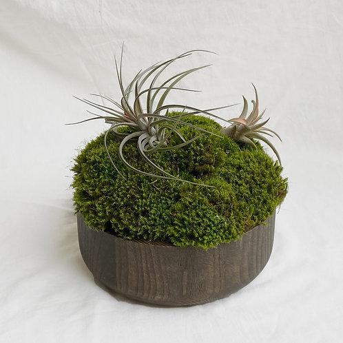 Urban Moss Bowl