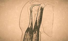 shoulder-bicep-1_edited_edited.jpg
