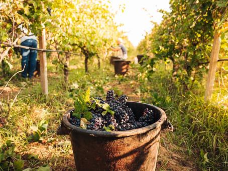 ワインは農産物なのか