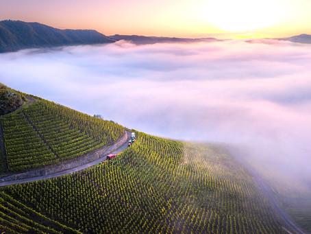 ブドウ畑をワインで描写する画家