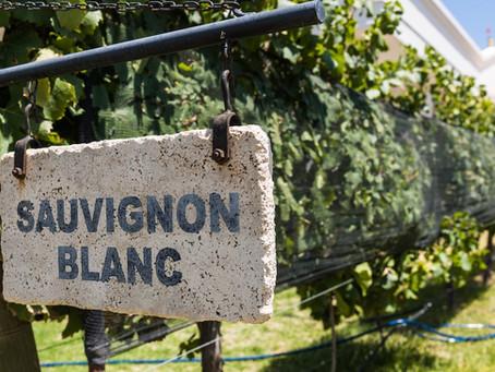 葡萄品種から探るペアリング術 <3> ソーヴィニヨン・ブラン