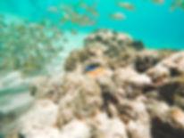 Peixes em Fernando de Noronha | @mundoporelas