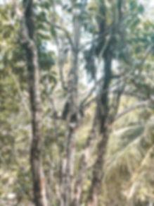 Bicho Preguiça, Floresta Amazônica | @mundoporelas