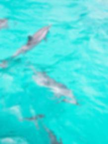 Golfinhos em Noronha | @mundoporelas