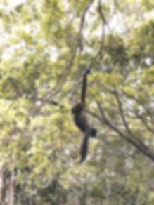 Macaco na Floresta Amazônica | @mundoporelas