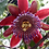 Thumbnail: Jersey Girl (Passion Fruit & Passion Flower)