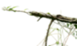 branch-png-transparent-images-143948-930