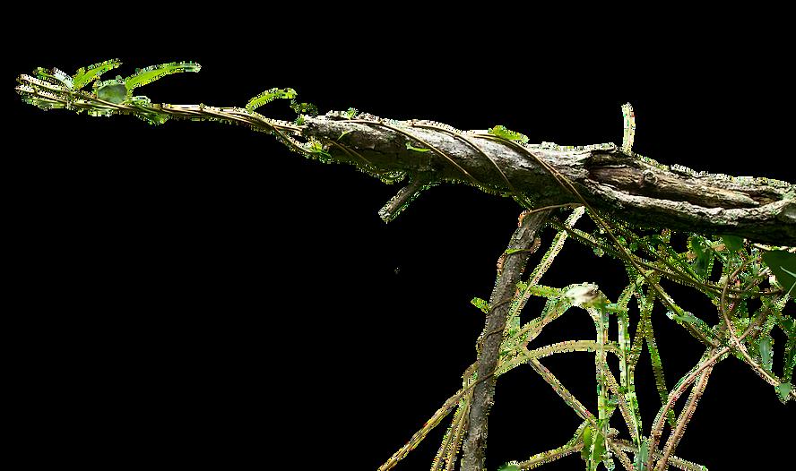 branch-png-transparent-images-143948-930