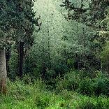 Тихий лес