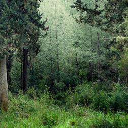 Ruhige Wald