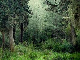 klidný les