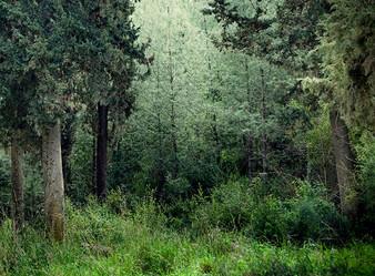 Puszcza – las – pole