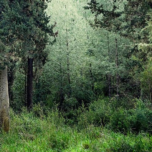 Deep Sleep in a Forest