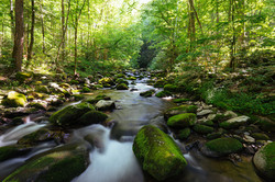 Huckberry_Great_Smoky_Mountain_National_Park_Insider_s_Guide_Kyle_Frost_Creek
