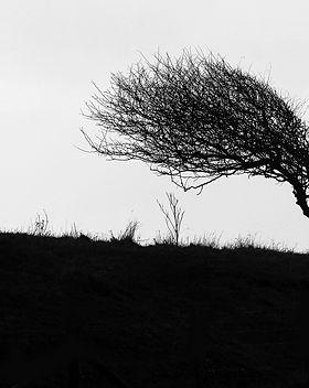 windswept-484796_1920.jpg