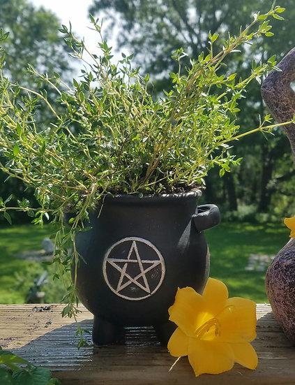 Pentacle Cauldron Herb Pot