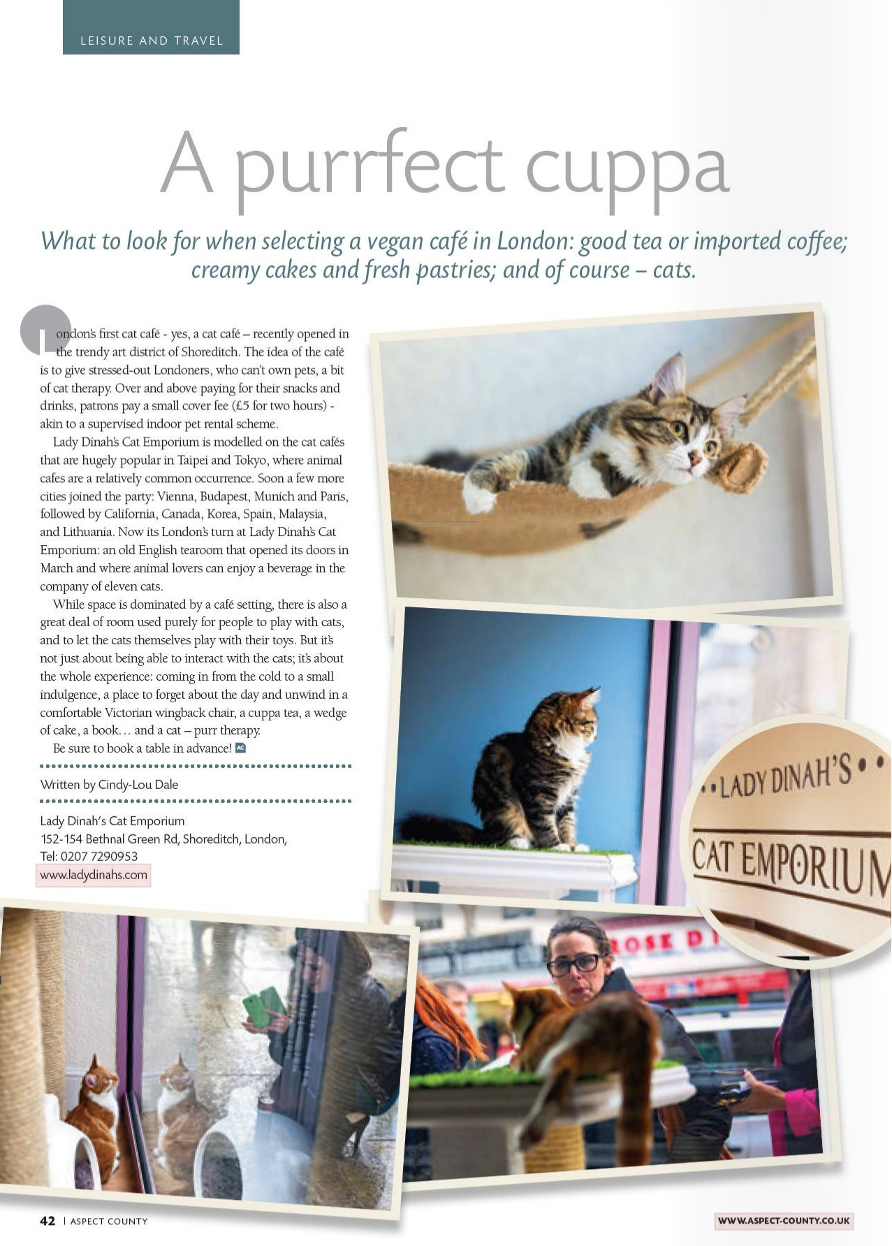Aspect County, UK - Lady Dinahs Cat Emporium
