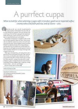 Aspect County, UK - Lady Dinahs Cat Emporium