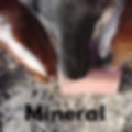 horse mineral.png