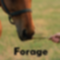 horse forage.png