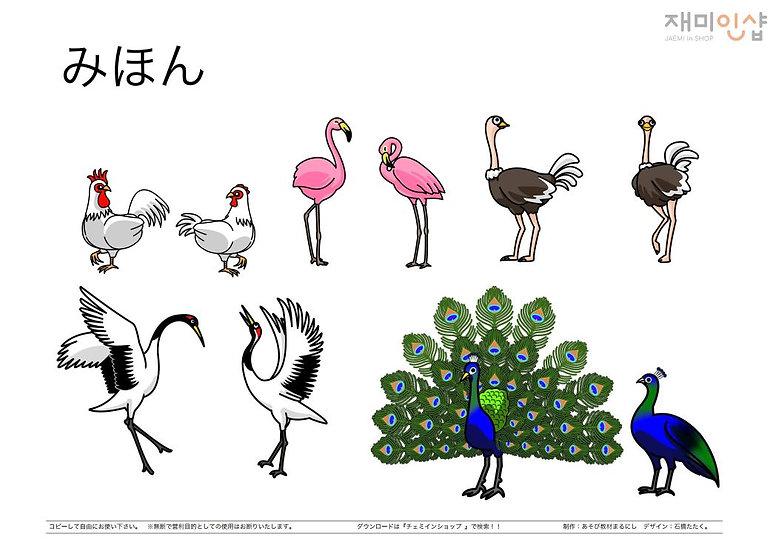 いきものぬりえ③(鳥類)