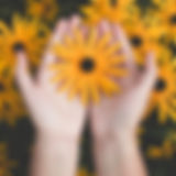 person-holding-yellow-black-eyed-susan-f