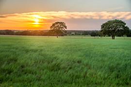 Field-sunset.jpg