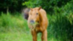 animal-brown-close-up-120011 (2) - Copy.